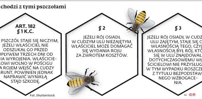 O co chodzi z tymi pszczołami