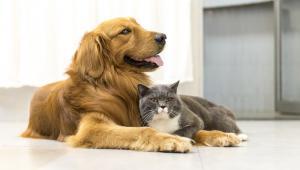 Polisy dla zwierząt domowych chronią właścicieli pupili przed kosztami nagłych zachorowań lub, gdy zwierzę wyrządzi jakąś szkodę w obcym mieniu