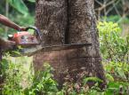 Nielegalny wyrąb drzew: Cena za wycinkę może być wysoka