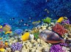 Hurghada – jeżeli nie Wyspy Kanaryjskie, to może Egipt i Hurghada? Hurghada stanowi idealne miejsce dla wszystkich miłośników nurkowania. Tygodniowy pobyt w 3-gwiazdkowym hotelu z dwoma posiłkami wliczonymi w cenę wyjazdu jest możliwy już za 1565 złotych. Opcja All inclusive i zakwaterowanie w 4* hotelu jest możliwe już za 1810 złotych. (Podane ceny dot. wylotów z Katowic (obie wycieczki) i Poznania  (1810 zł) w dniu 29 marca br.