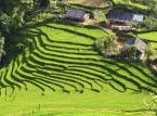"""Tarasy ryżowe w Banaue (Filipiny) <br><br> Filipińczycy nazywają to miejsce położone na zboczach górskich w prowincji Ifugao, stworzone 2 tysiące lat temu przez człowieka, ósmym cudem świata.  Gdyby kolejne """"stopnie"""" tego niesamowitego miejsca ułożyć jeden za drugim, wówczas mogłyby one opasać połowę kuli ziemskiej! Tarasy utworzono pracą ludzkich rąk, bez użycia jakichkolwiek maszyn. W 1995 roku włączono je na listę światowego dziedzictwa UNESCO. Co ciekawe wiele pól wchodzących w skład tego obiektu wciąż jest używanych przez filipińskich rolników, którzy uprawiają tu ryż i warzywa."""