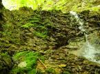 Tereny projektowanego Turnickiego Parku Narodowego są domem dla największych drapieżników występujących w Polsce. Można spotkać tam objętego ochroną niedźwiedzia, rysia, żbika czy wilka. Ostoje mają tam też najrzadsze gatunki ptaków: orzeł przedni, orlik krzykliwy, bocian czarny, puchacz, włochatka, sóweczka, dzięcioł trójpalczasty i białogrzbiety a także owady będące reliktami lasów pierwotnych, jak zgniotek cynobrowy, zagłębek bruzdkowany, ponurek Schneidera, oraz rzadkie i zagrożone, jak pachnica dębowa, nadobnica alpejska czy biegacz urozmaicony.  <br><br> fot. Maciek Suchorabski